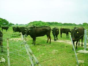 よい肉はよい牧場のよい家畜から
